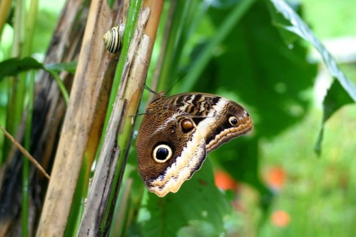 Mariposa y caracol.