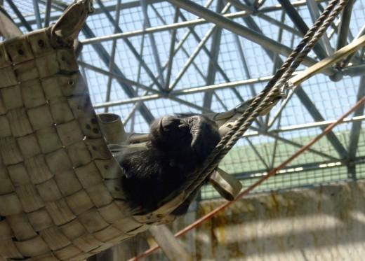 Una siestecita en la tumbona.