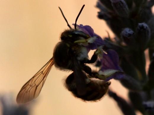 Insecto a contraluz.
