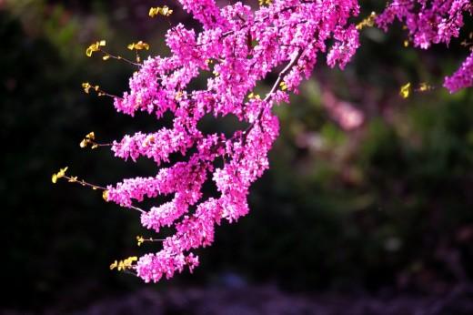 Ramita de lilo en flor.