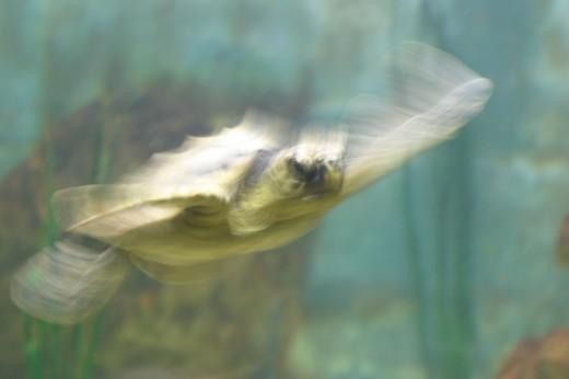 Imagen movida de una tortuga marina.