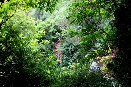 Bosque húmedo español en el Monasterio de Piedra.