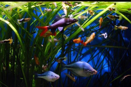 Foto antigua de mi acuario de 750L.
