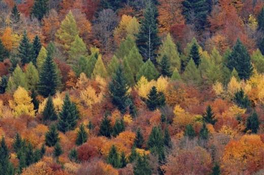Año Internacional de los Bosques