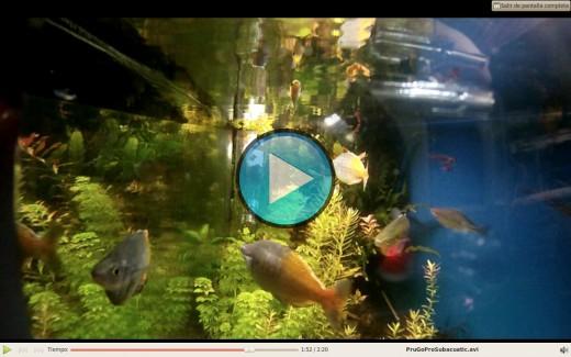 Prueba subacuática GoPro.