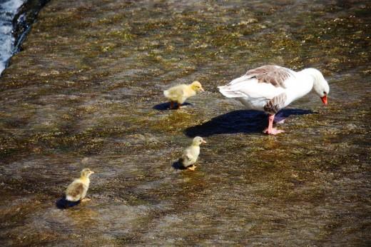 La familia haciendo el ganso en Aranjuez.