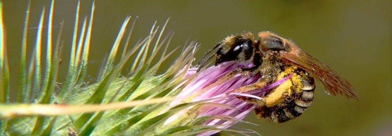 Macrofotografía abeja