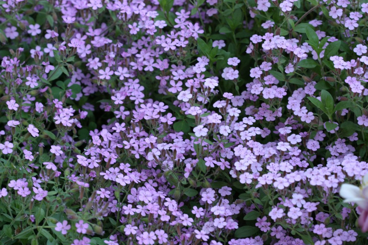 Foto para usar como textura de flores.