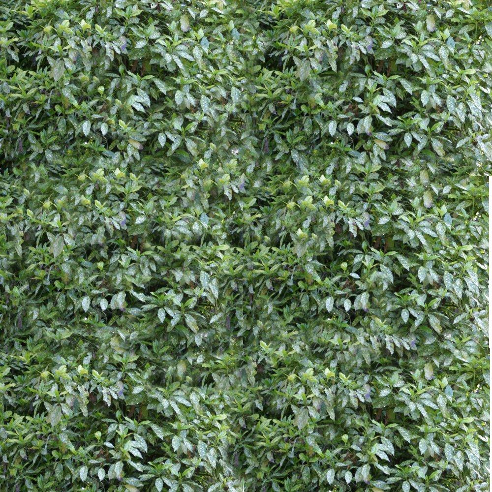 Textura de arbusto
